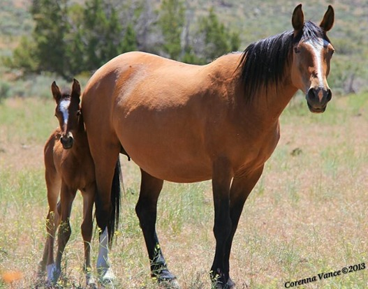 About Wynema Ranch Wild Horse Sanctuary