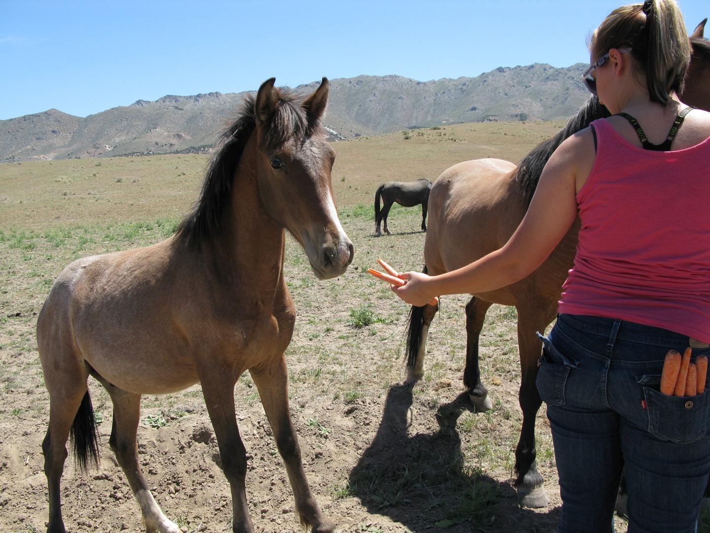 Wynema Ranch Wild Horse Sanctuary slider 1