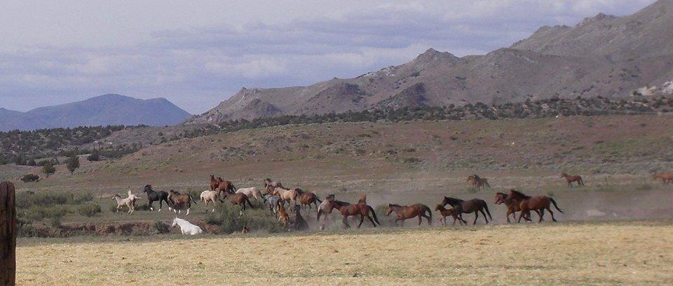 Contact Wynema Ranch Wild Horses Sanctuary