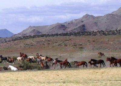 Wynema Ranch Wild Horse Sanctuary slider 2
