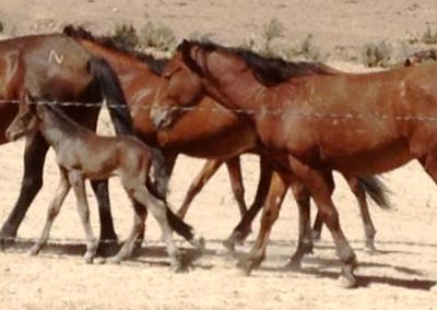 Wynema Ranch Wild Horse Sanctuary slider 3